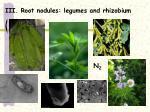 iii root nodules legumes and rhizobium