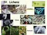iv lichens