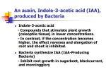an auxin indole 3 acetic acid iaa produced by bacteria