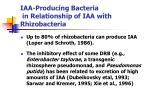 iaa producing bacteria in relationship of iaa with rhizobacteria