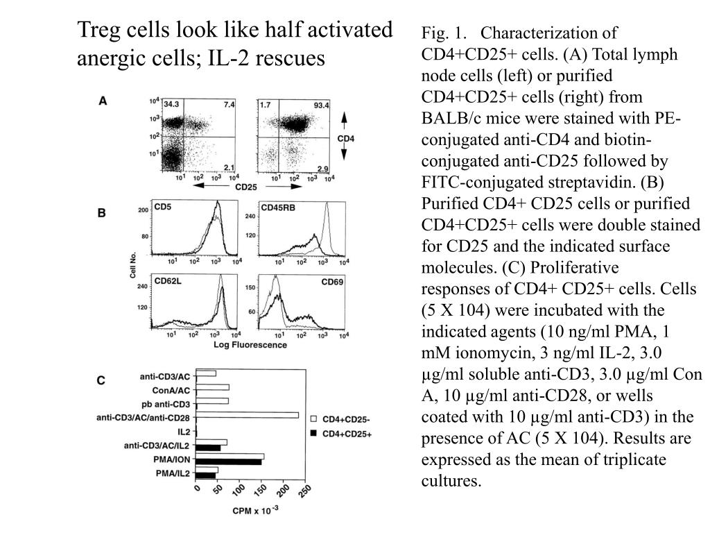 Treg cells look like half activated