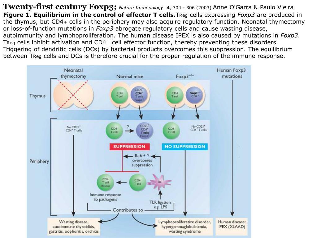 Twenty-first century Foxp3;