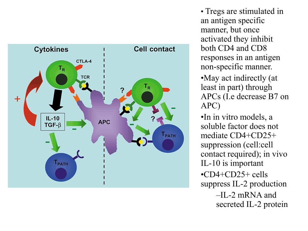 Tregs are stimulated in an antigen specific manner, but once activated they inhibit both CD4 and CD8 responses in an antigen non-specific manner.
