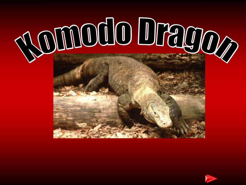komodo dragon l.