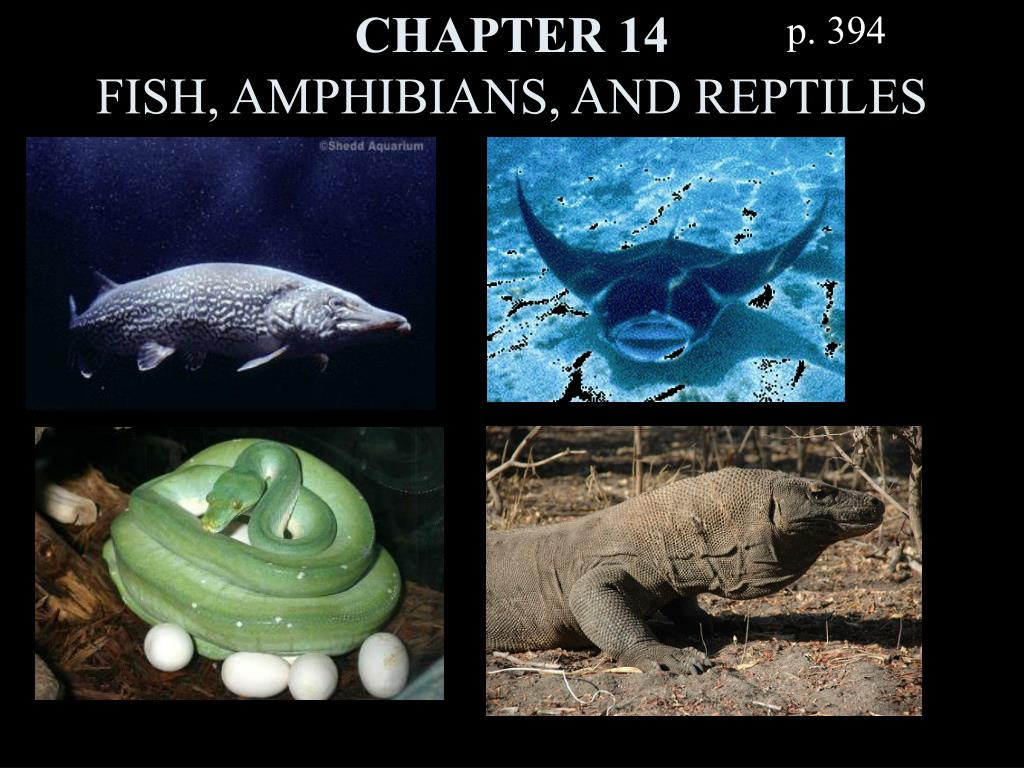 chapter 14 fish amphibians and reptiles l.
