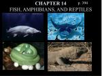chapter 14 fish amphibians and reptiles