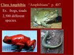 class amphibia amphibians p 407
