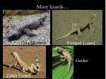 more lizards