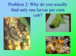 problem 2 why do you usually find only one larvae per corn cob