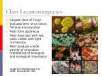 class lecanoromycetes