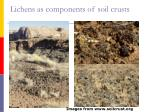 lichens as components of soil crusts