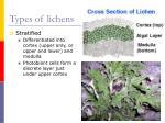 types of lichens9