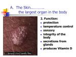 a the skin the largest organ in the body
