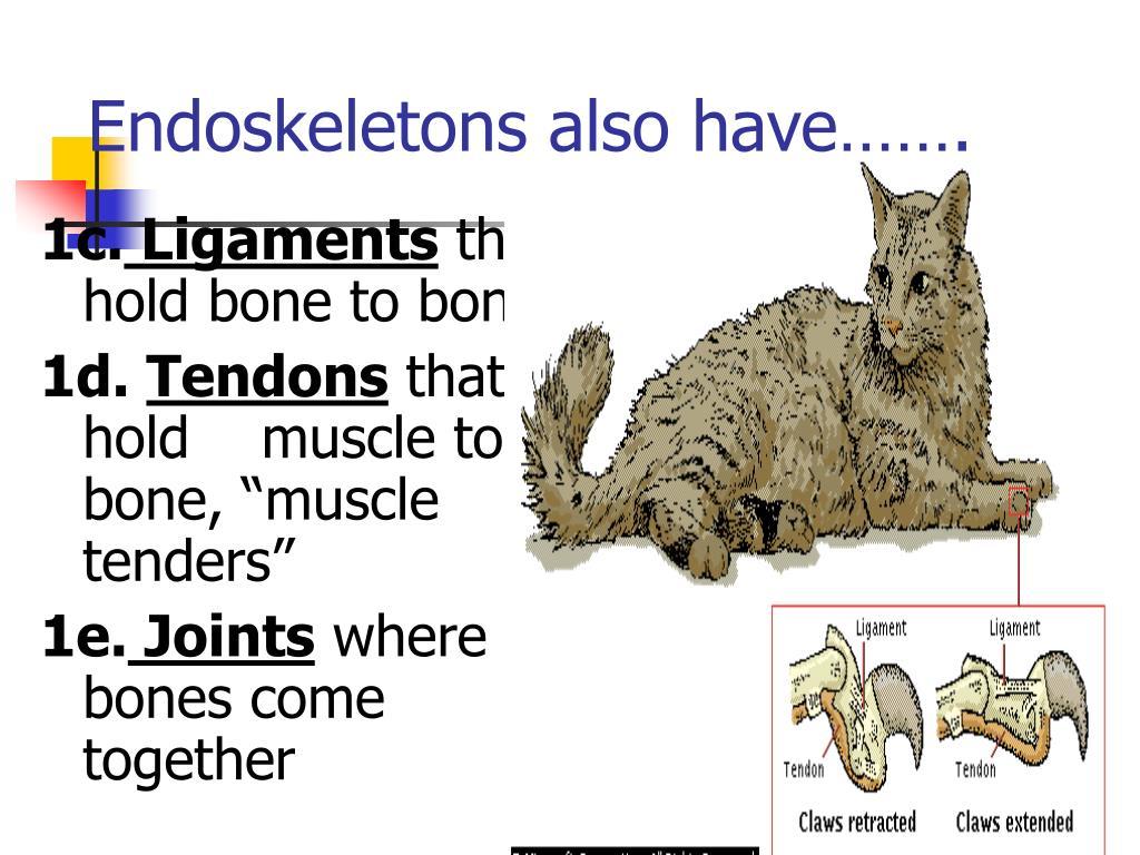 Endoskeletons also have…….