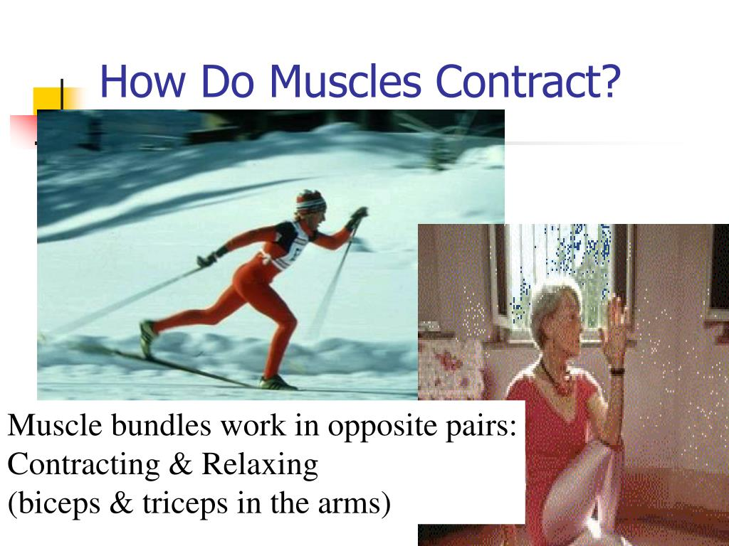 How Do Muscles Contract?