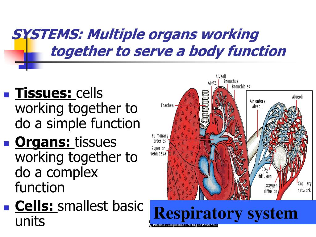 SYSTEMS: Multiple organs working
