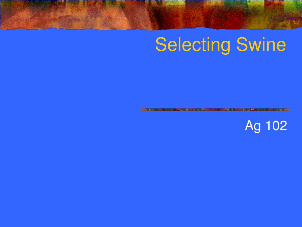 selecting swine l.