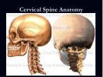 cervical spine anatomy7