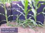lazyplant1