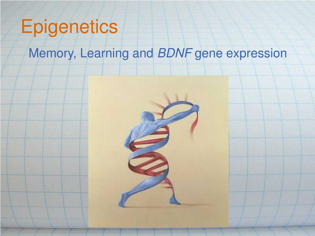 memory learning and bdnf gene expression l.