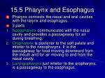 15 5 pharynx and esophagus