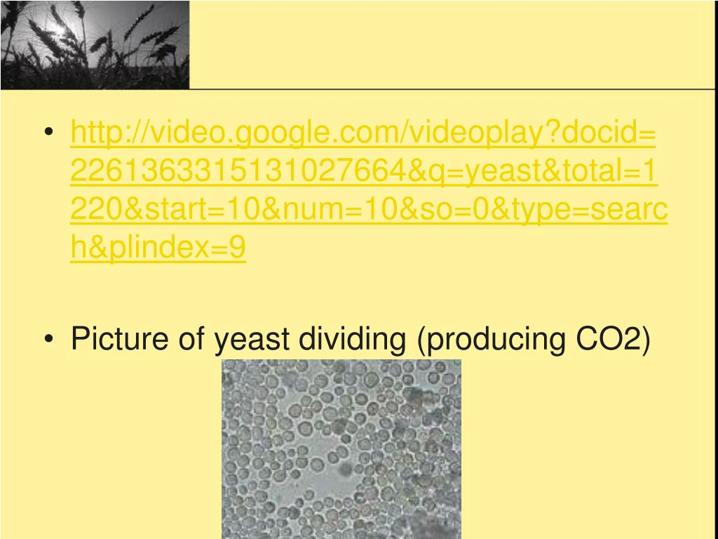 http://video.google.com/videoplay?docid=2261363315131027664&q=yeast&total=1220&start=10&num=10&so=0&type=search&plindex=9
