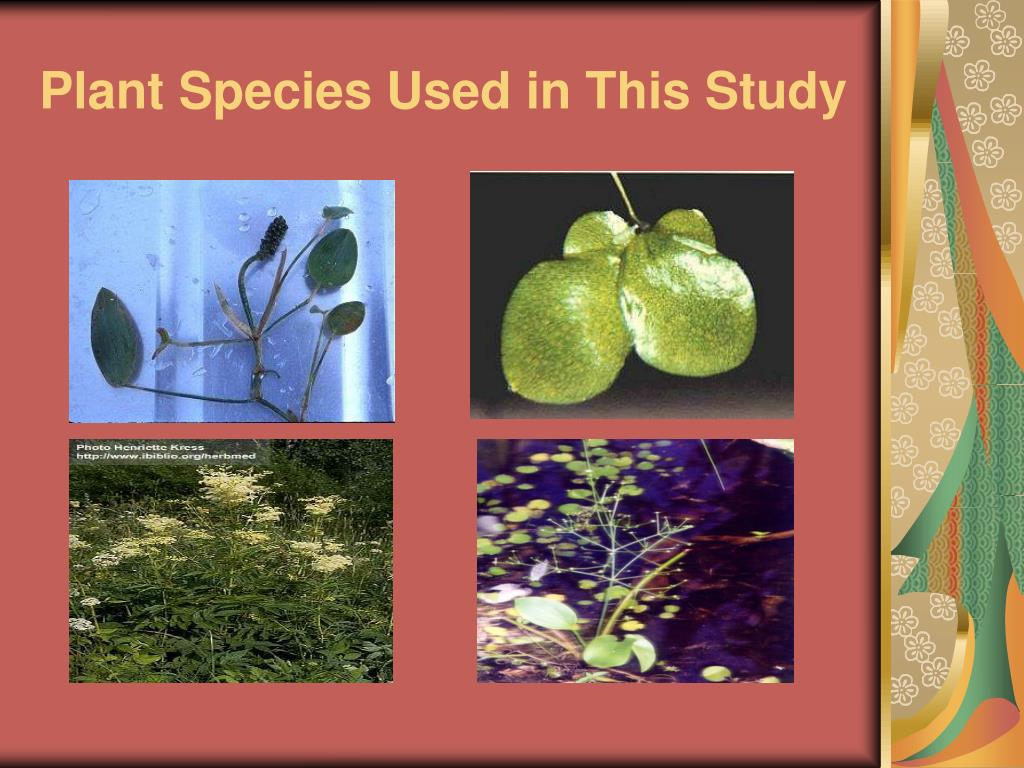 Plant Species Used in This Study