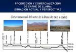 produccion y comercializacion de carne de llama situacion actual y perspectivas4