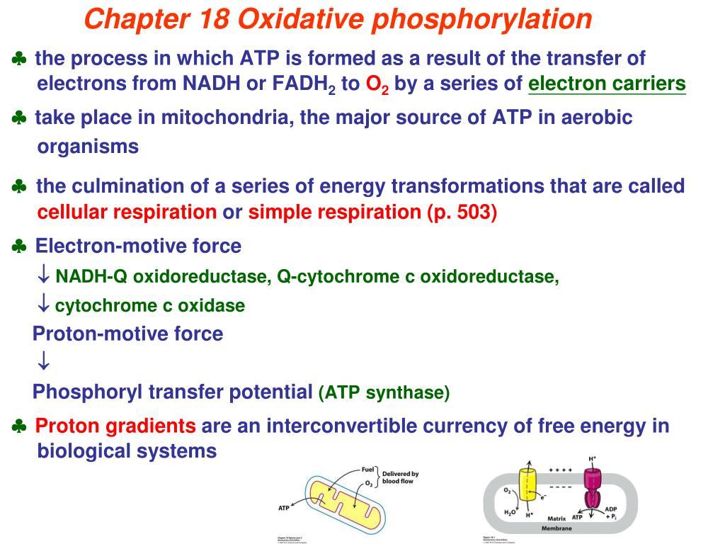 chapter 18 oxidative phosphorylation l.