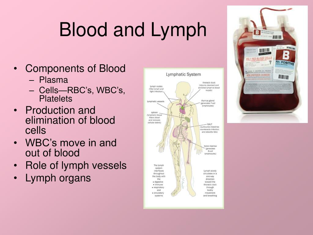 blood and lymph l.
