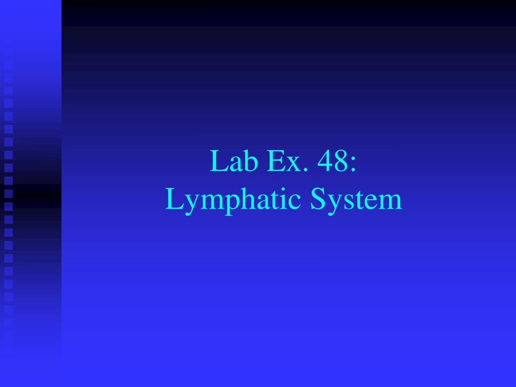 lab ex 48 lymphatic system l.