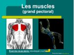 les muscles grand pectoral