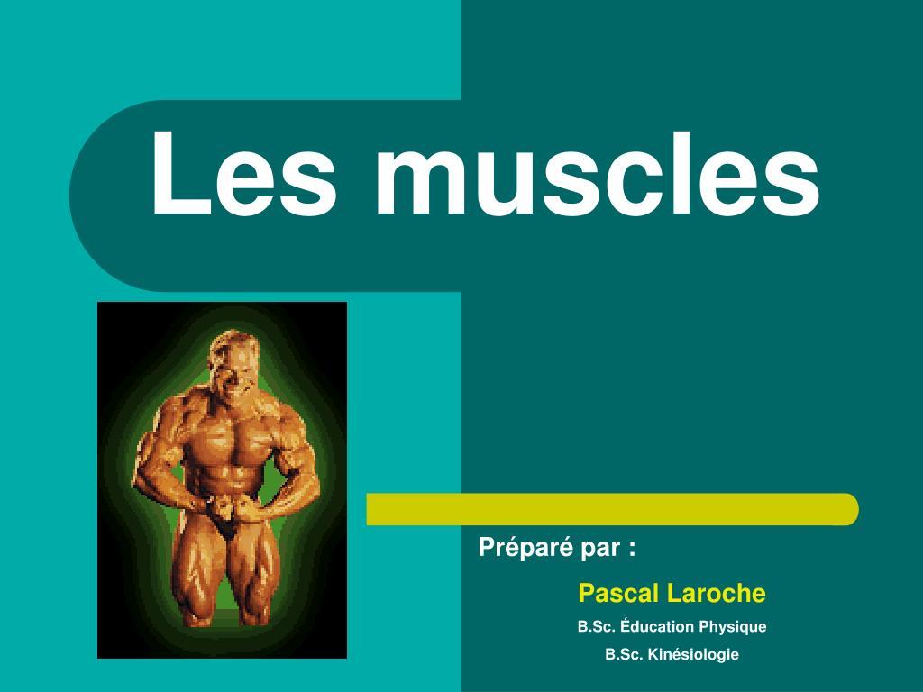les muscles l.