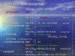 fatty acid beta oxydation