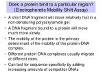 does a protein bind to a particular region electrophoretic mobility shift assay