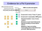 evidence for a pol ii promoter