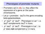 phenotypes of promoter mutants