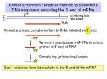 primer extension another method to determine dna sequence encoding the 5 end of mrna