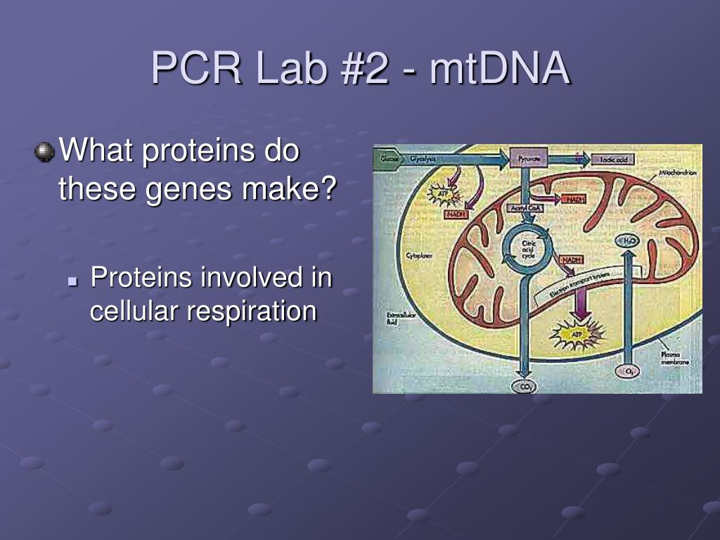 PPT - Polymerase Chain Reaction PowerPoint Presentation - ID
