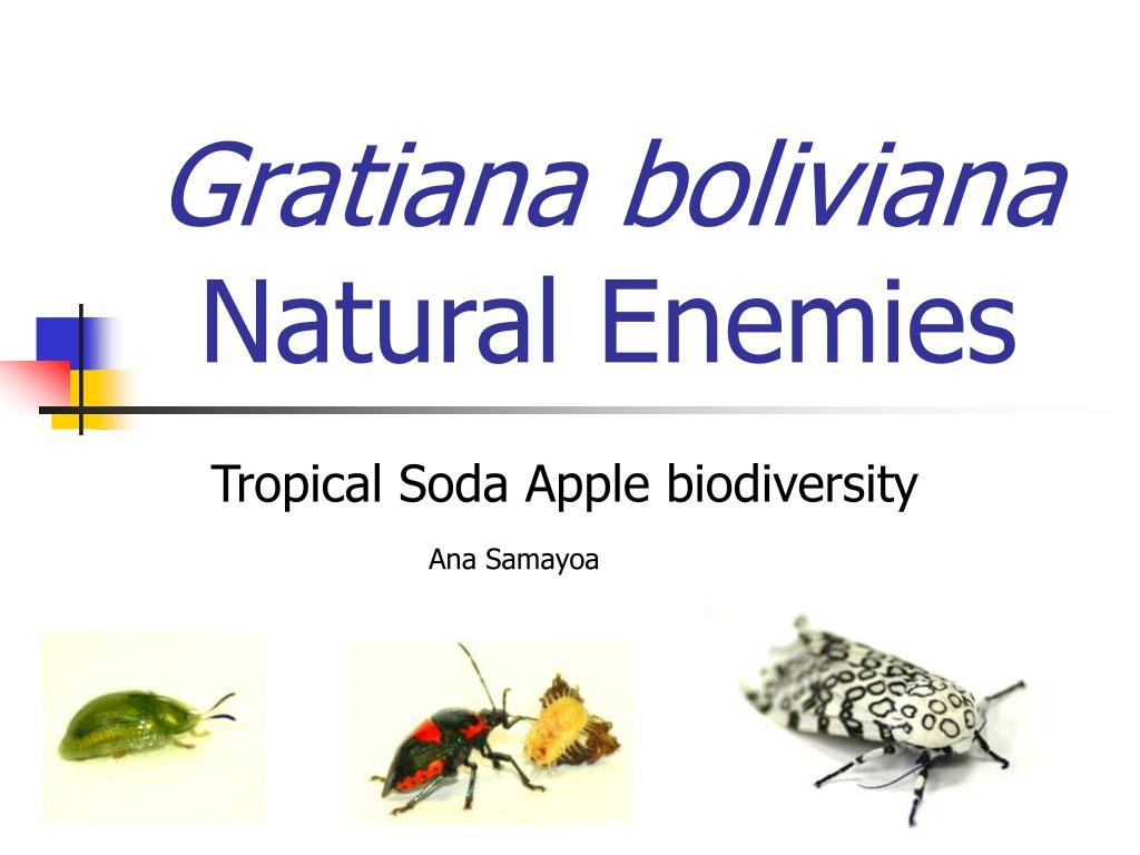 gratiana boliviana natural enemies l.