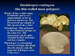 daedaleopsis confragosa the thin walled maze polypore