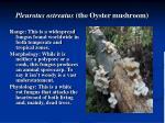 pleurotus ostreatus the oyster mushroom