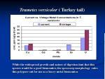 trametes versicolor turkey tail22