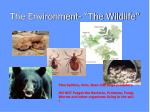 the environment the wildlife
