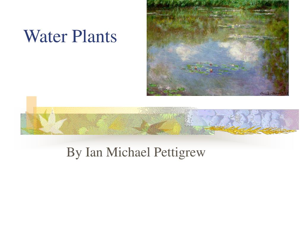 water plants l.