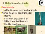 1 selection of animals
