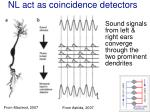nl act as coincidence detectors