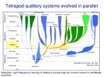 tetrapod auditory systems evolved in parallel