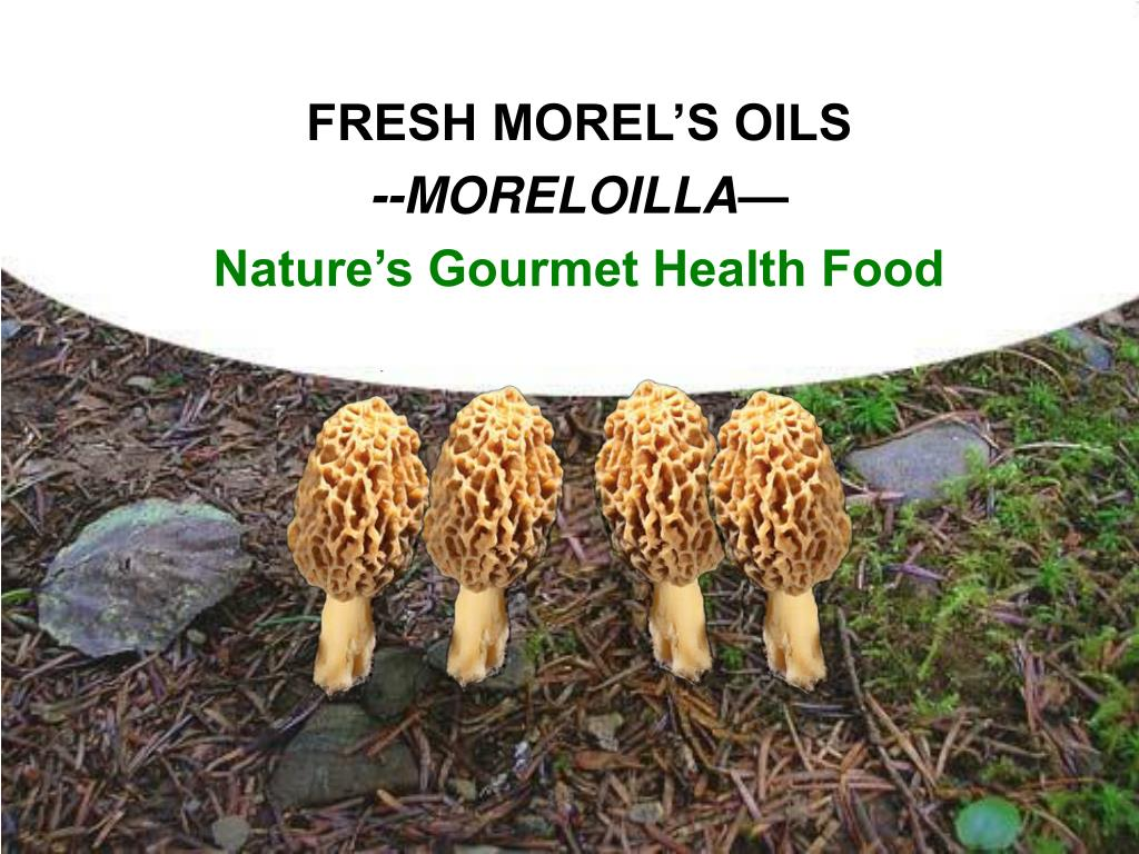 FRESH MOREL'S OILS