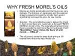 why fresh morel s oils